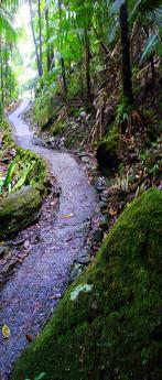 Path_narrow