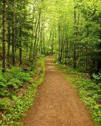 Path.image