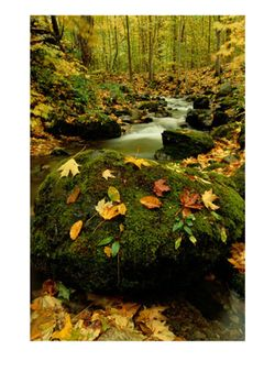 Fall.mountain.stream