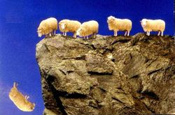 Herd_over_cliff