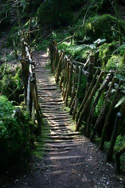 Path_bridge