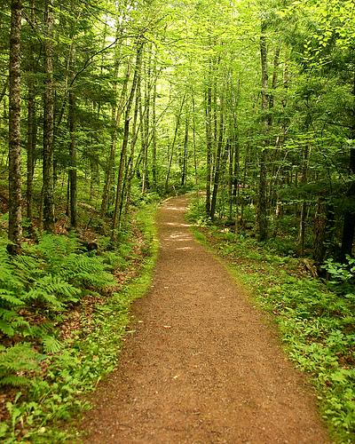 Path_woods_image