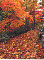 Fall_trees_path