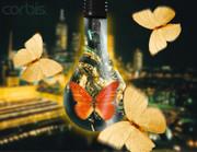 Moth_bulb